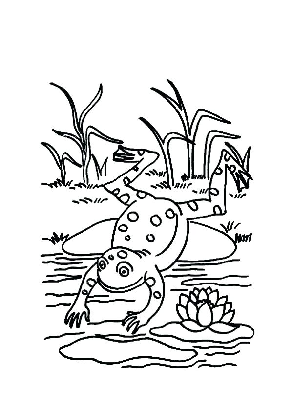 600x849 Pond Coloring Page Jumping Frog Coloring Page Collection Pond