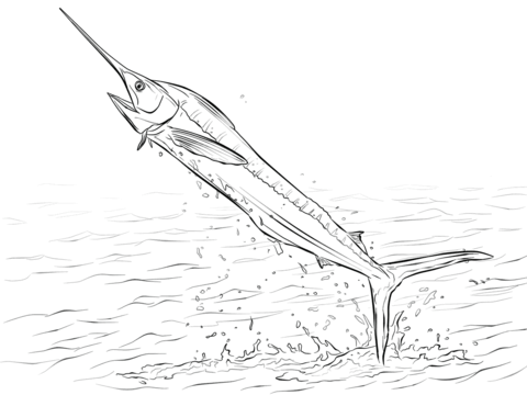 480x360 White Marlin Fish Jumping Out Of Water With Beautiful View
