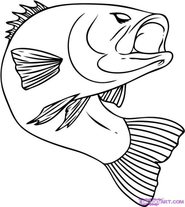 600x670 Fish Pictures To Color How To Draw A Bass, Step