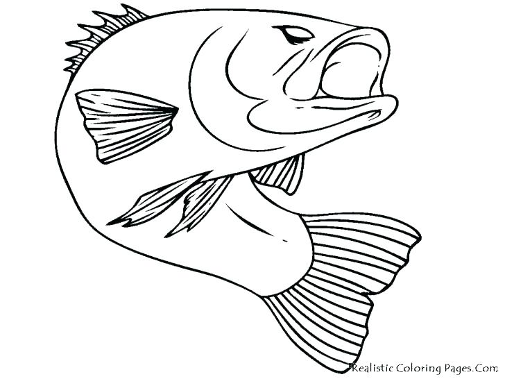 728x546 Coloring Pages Of Fish One Fish Two Fish Red Fish Blue Fish