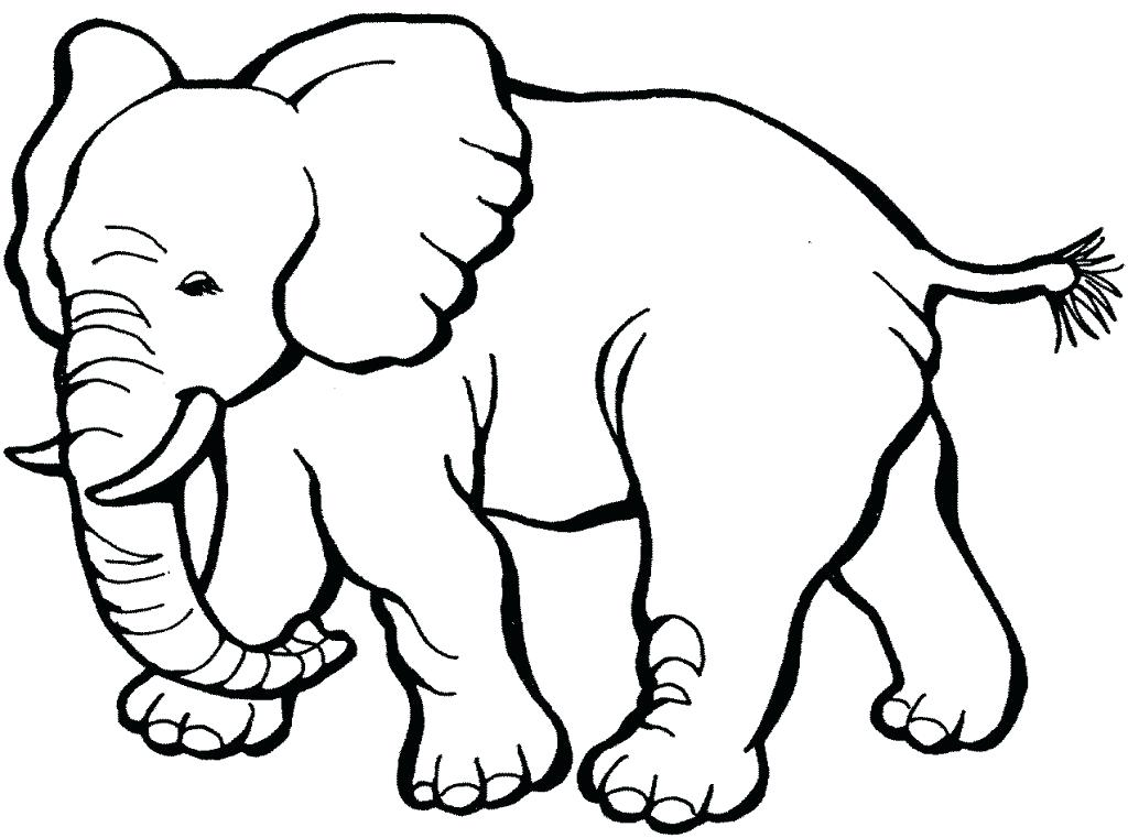 Jungle Animals Coloring Pages Preschool At Getdrawings Com Free