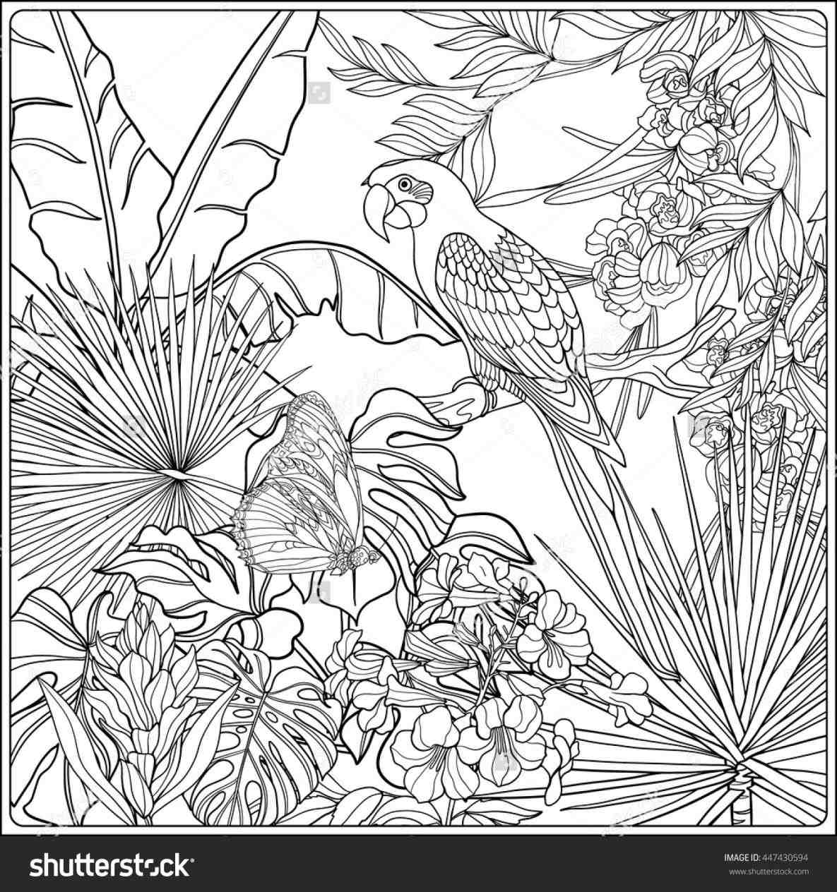 1185x1264 Jungle Plants Coloring Pages Of The Jungle Coloring Page Pages