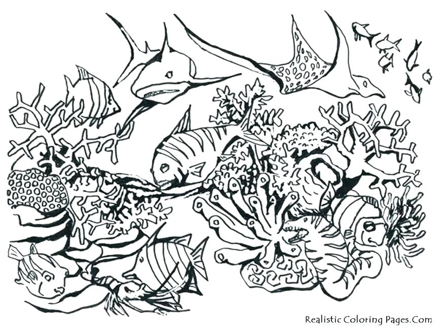 863x647 Animal Print Coloring Pages Jungle Printable Coloring Pages Best