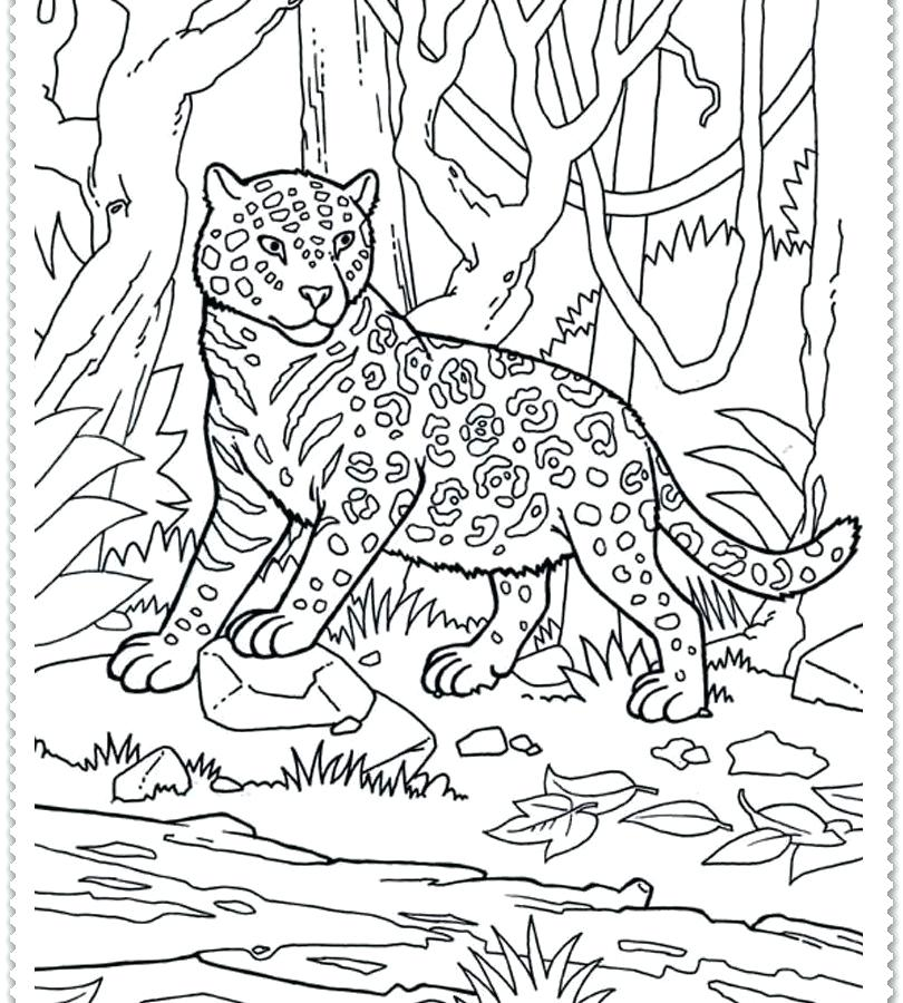 810x900 Jungle Coloring Pages Printable