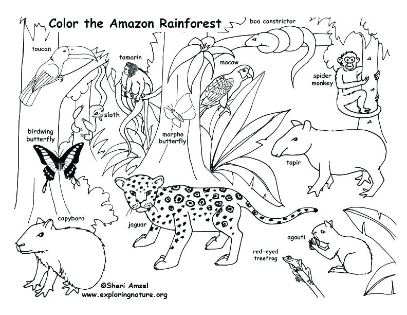 792x612 Jungle Book Coloring Pages Printable Jungle Book Coloring Sheets