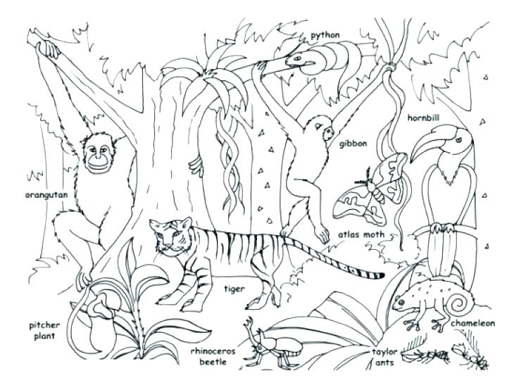 730x554 Animal Coloring Pages Printable Jungle Coloring Page Printable