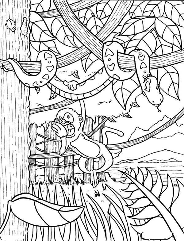 600x786 Monkey Hanging On Snake Rainforest Coloring Page