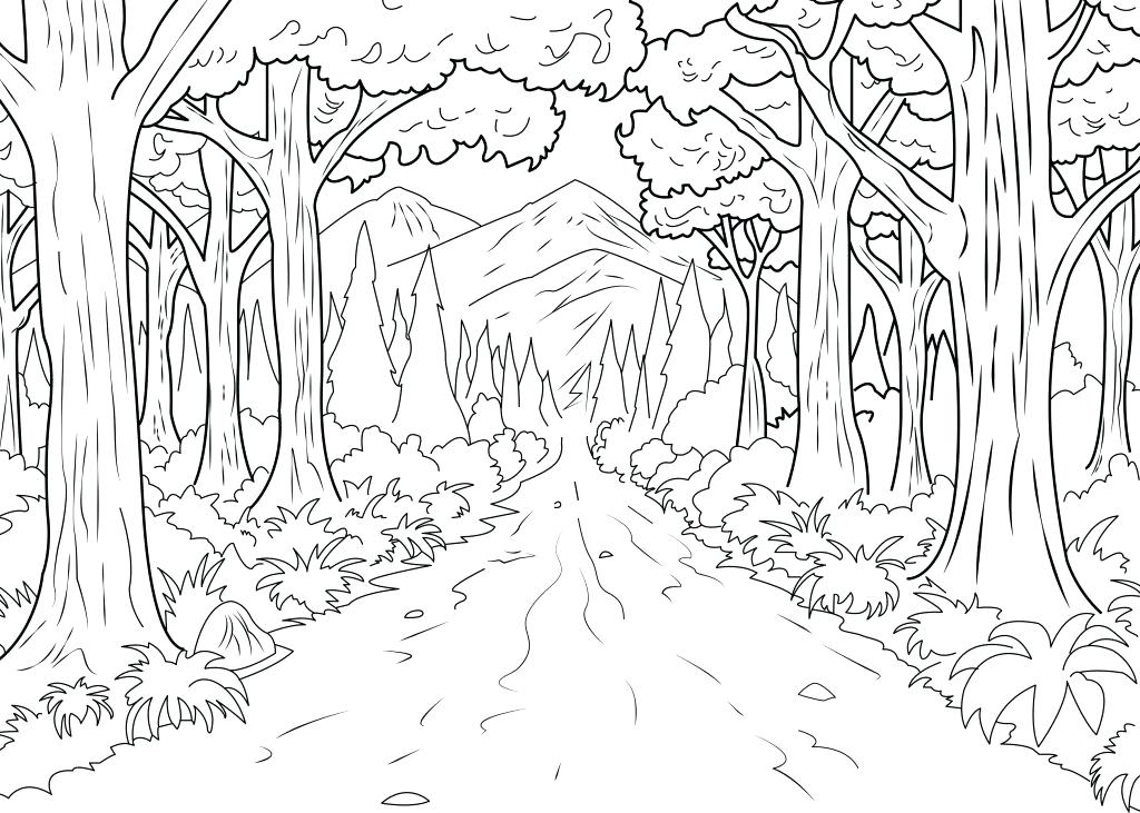 1024x731 Forest Coloring Page Coloring Pages For Kids Collection Printable