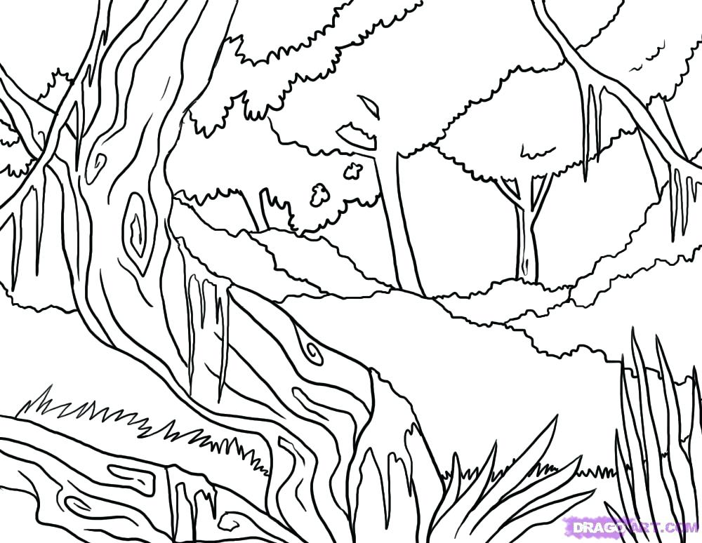 1000x774 Jungle Coloring Sheets Pictures Of Jungle Animals Jungle Animal