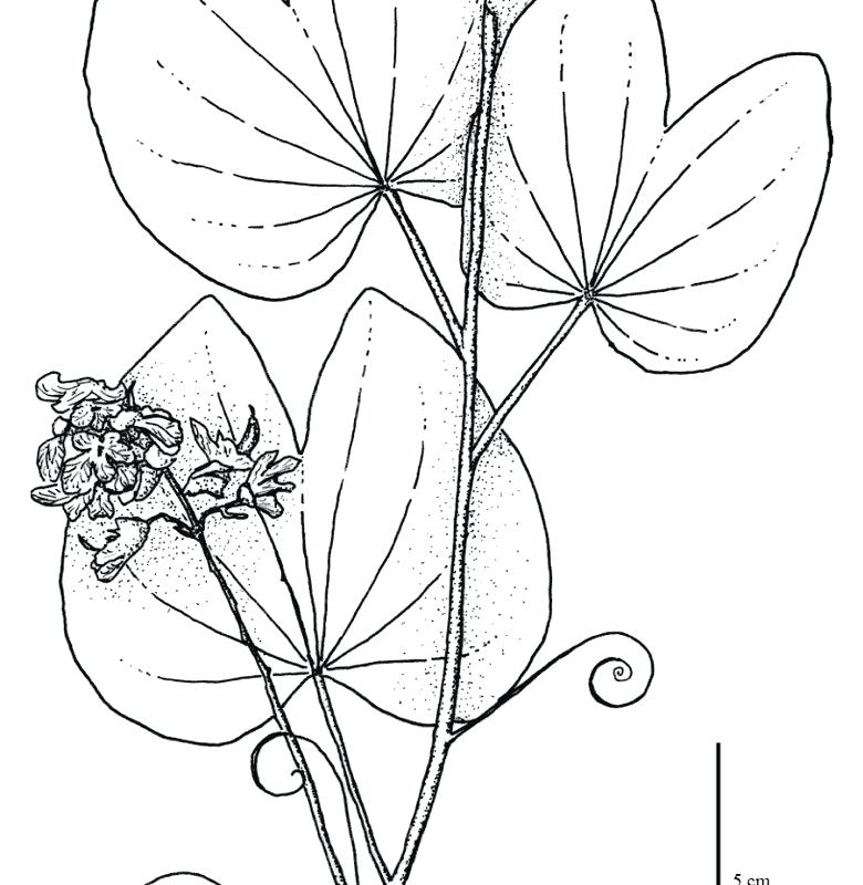 780x800 Amazon Coloring Pages Tropical Color Jungle Amazon Coloring Pages