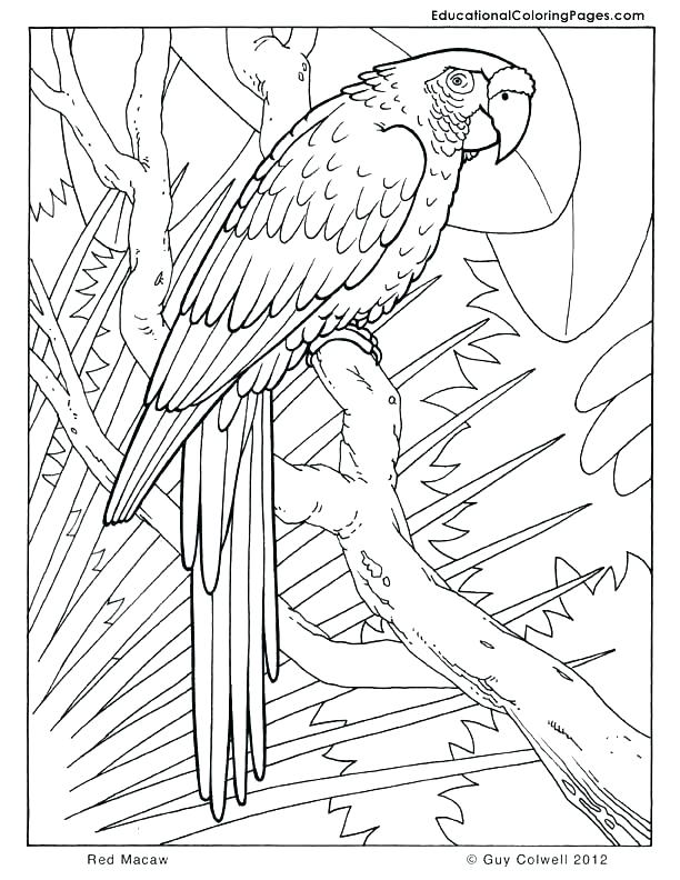 612x792 Jungle Junction Coloring Pages Jungle Animal Coloring Pages Jungle