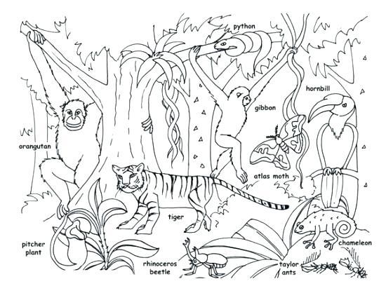 550x418 Jungle Book Coloring Page Downloadable Design Kids Design Kids