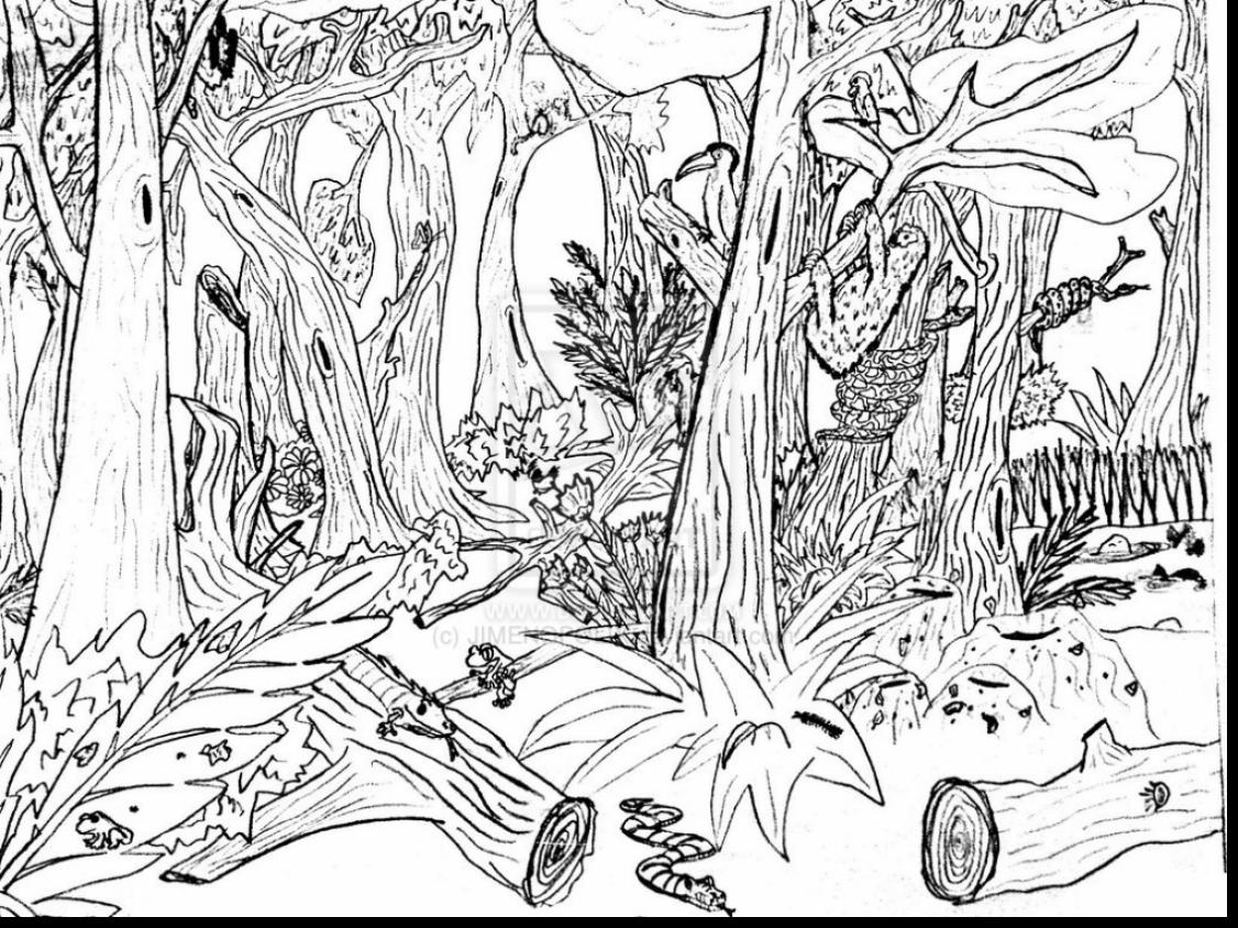 1126x844 Liberal Rainforest Scene Coloring Pages Jungle Page Free Printable