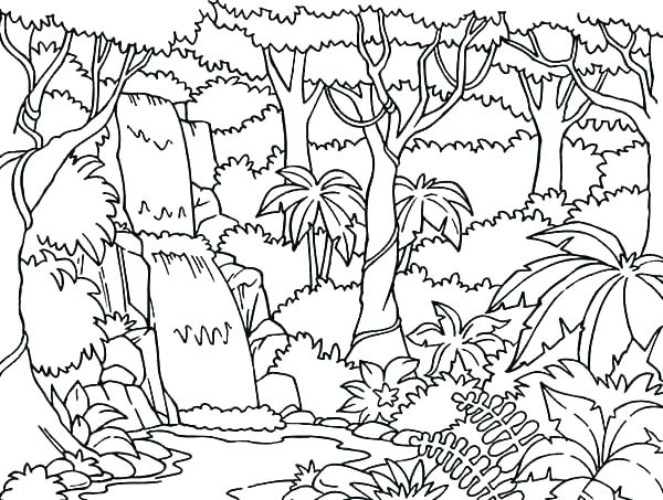 600x453 Jungle Coloring Pages Printable