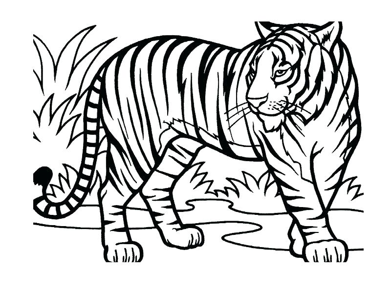 800x600 Jungle Coloring Page Jungle Printable Coloring Pages Also Drawing