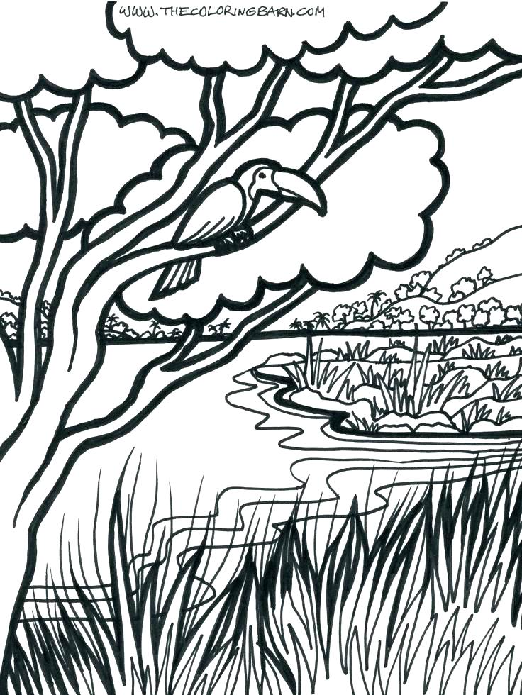 736x980 Jungle Coloring Page Power Rangers Jungle Fury Coloring Pages