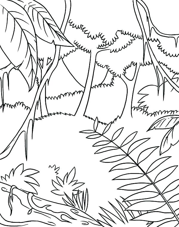 600x761 Jungle Coloring Page Coloring Sheets Awesome Tropic Coloring Page