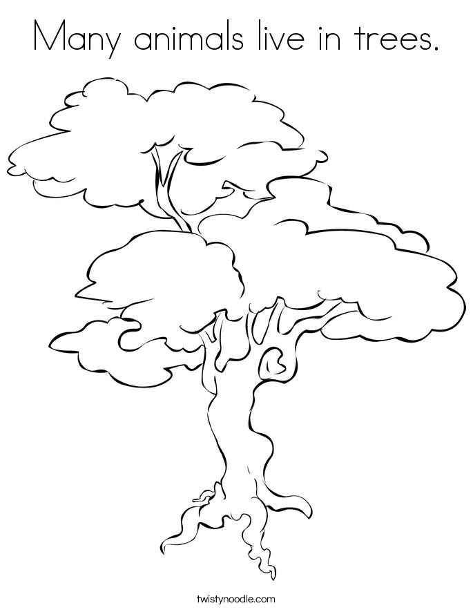 685x886 Many Animals Live In Trees Coloring Page