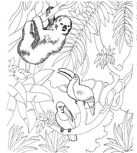 469x525 Palm Tree Coloring Sheets Cartoon Jungle Palm Trees Coloring
