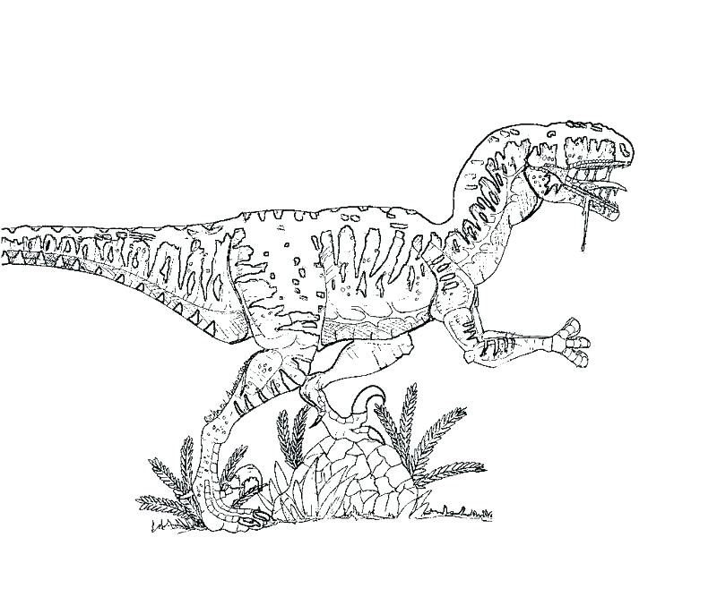 800x667 Jurassic World Raptor Coloring Pages Kids Coloring Coloring Pages