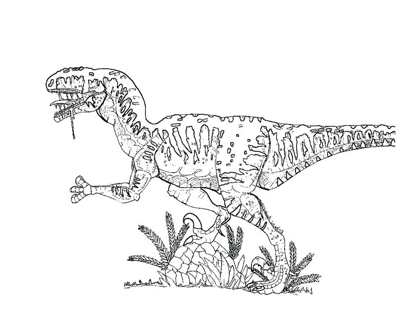 800x667 Velociraptor Coloring Page Coloring Pages Raptor Foot Soldier