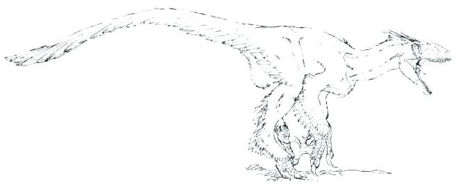 660x267 Velociraptor Coloring Pages Coloring Page Coloring Pages Coloring