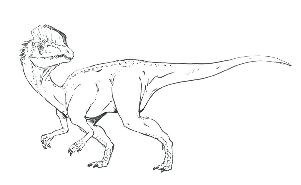 1023x631 Velociraptor Coloring Pages Coloring Pages Jurassic Park Raptor