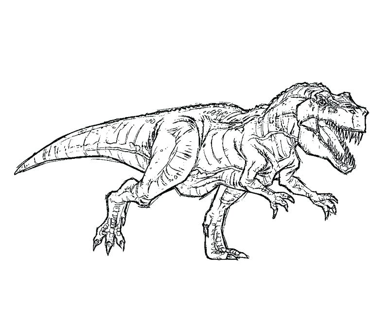800x667 Jurassic Park Coloring Pages Icontent