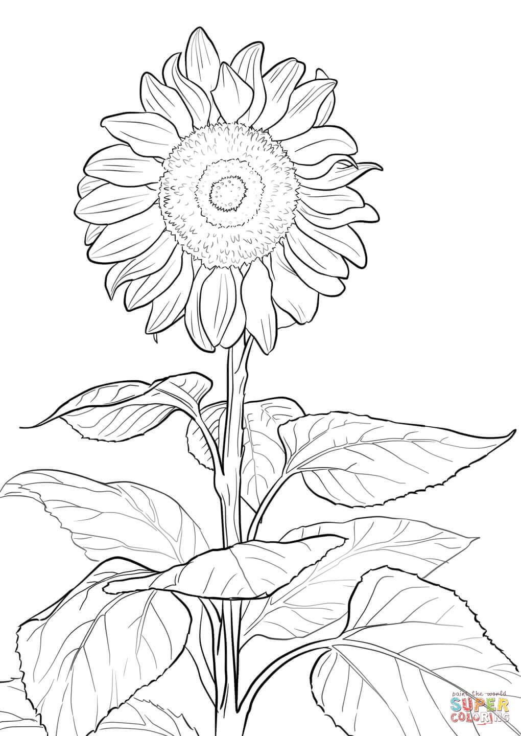 1020x1440 Cool Sunflower Coloring Page Kansas Day Skip T