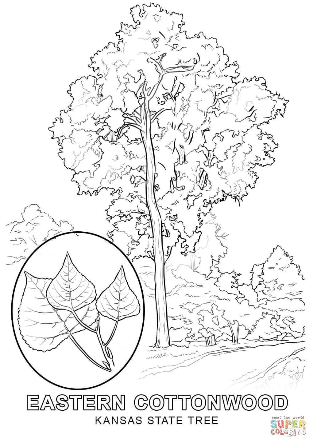 1020x1440 Kansas Coloring Pages State Flower Coloring Page Fun