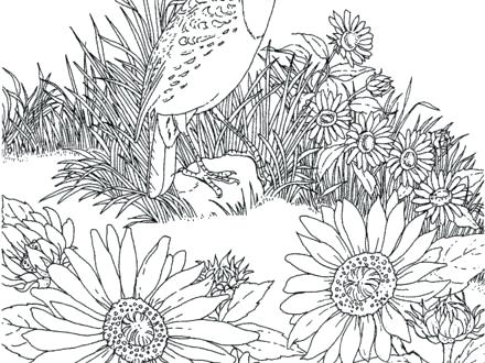 440x330 Kansas State Flag Coloring Page
