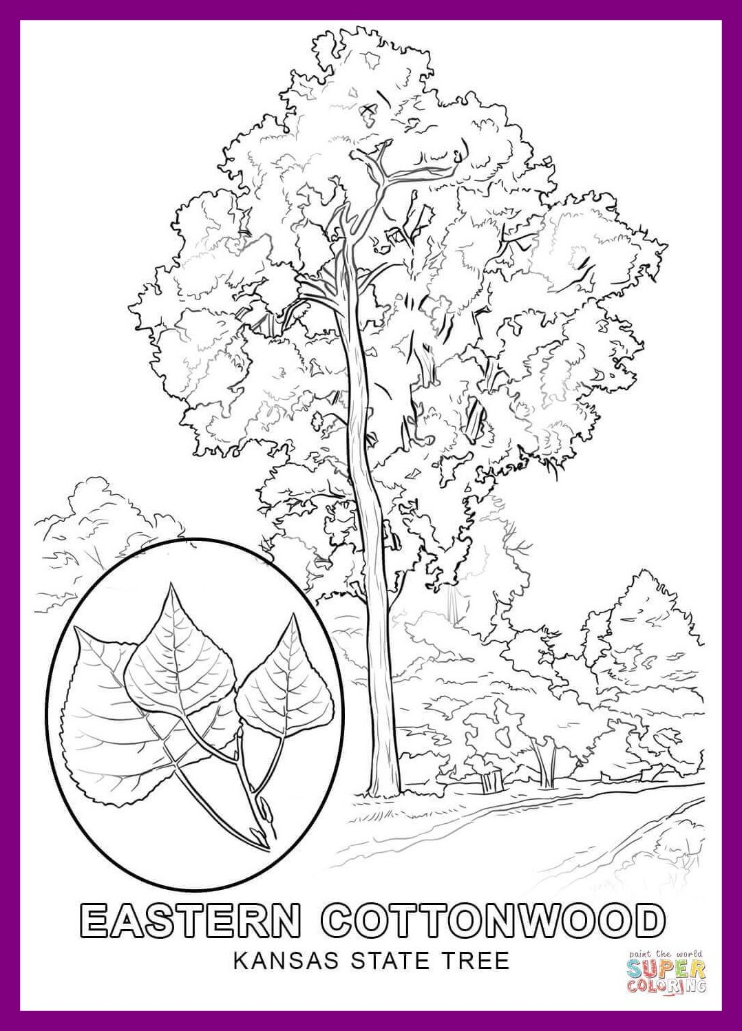 1078x1498 The Best Kansas State Tree Coloring Page Printable Of Flag Ideas