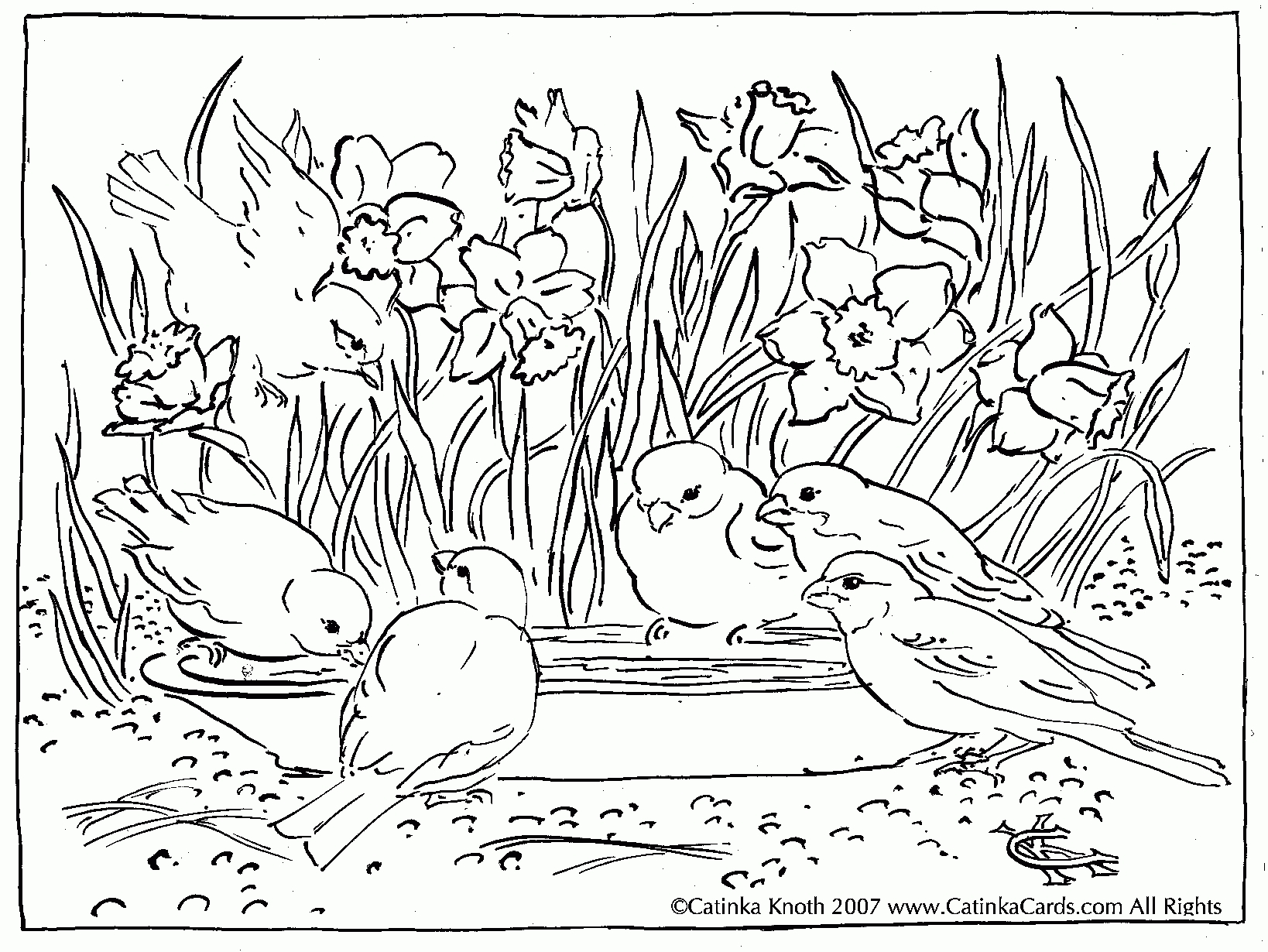 1638x1230 Cool Free Coloring Page Kansas Day Sunflower Coloring Page Ly