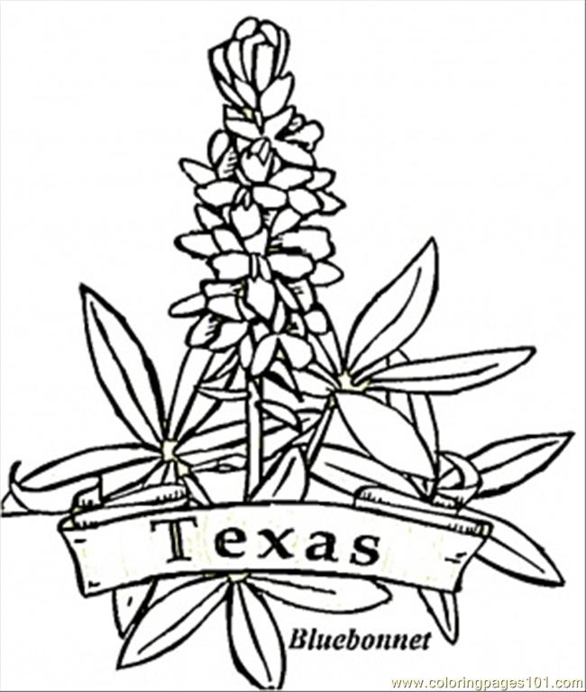 650x768 Kansas State Flag Coloring Page Many Interesting Cliparts