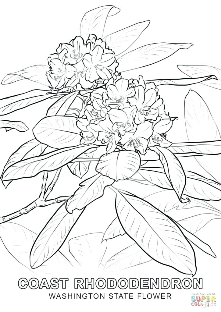 725x1024 State Flower Coloring Pages State Flower Coloring Pages Arkansas