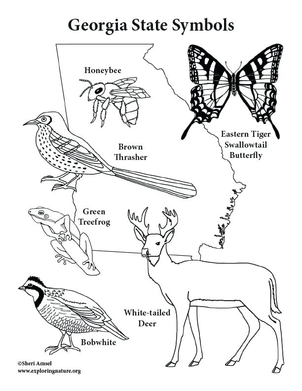 612x792 Illinois State Symbols Coloring Pages Page Fuhrer Von