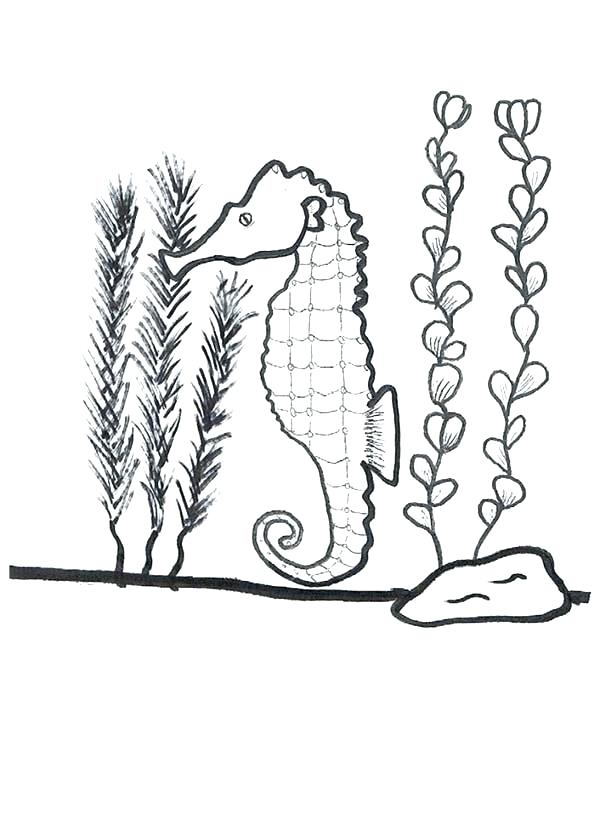 600x826 Seaweed Coloring Pages Seaweed Coloring Pages Cat Coloring Page
