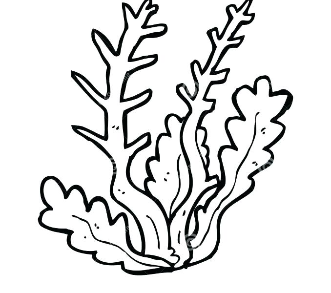 678x600 Seaweed Coloring Pages Seaweed Coloring Pages Seaweed Pictures