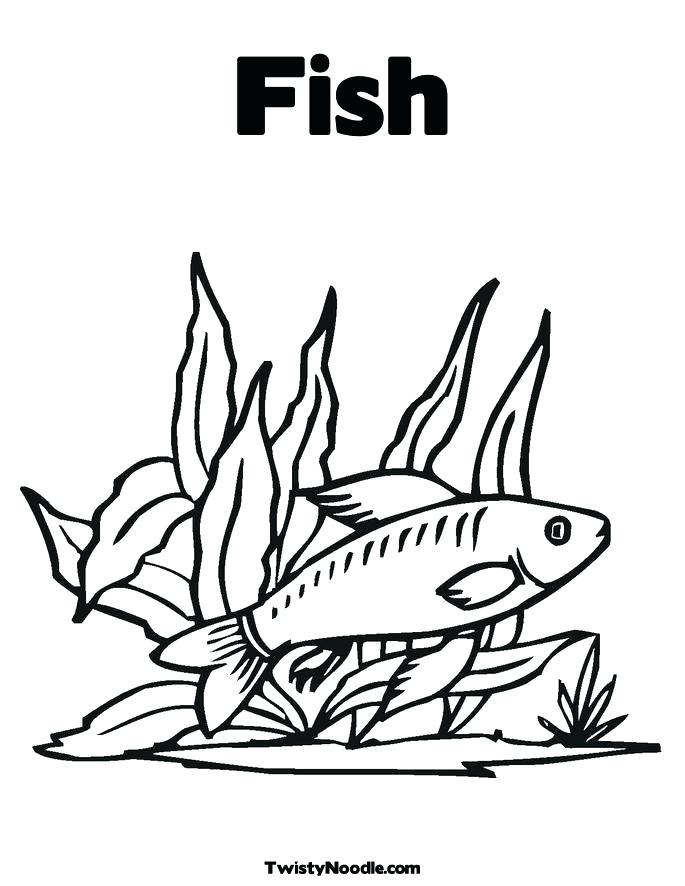 685x886 Seaweed Coloring Pages Seaweed Pictures To Color Seaweed Coloring