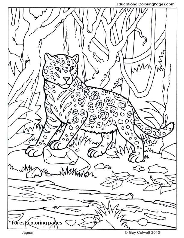 Kelp Forest Coloring Pages