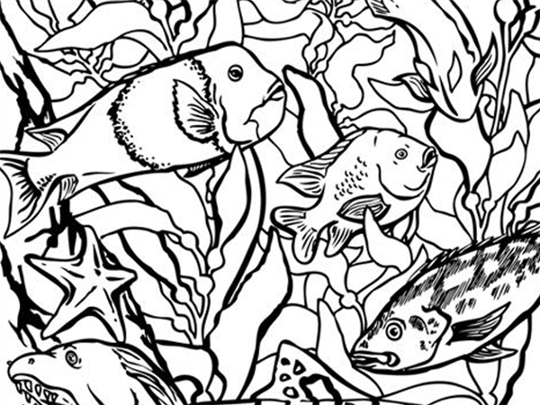 600x450 Coloring Pages