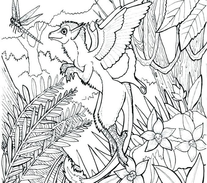 678x600 Forest Coloring Page Coloring Page With Lovely Sloth In Forest