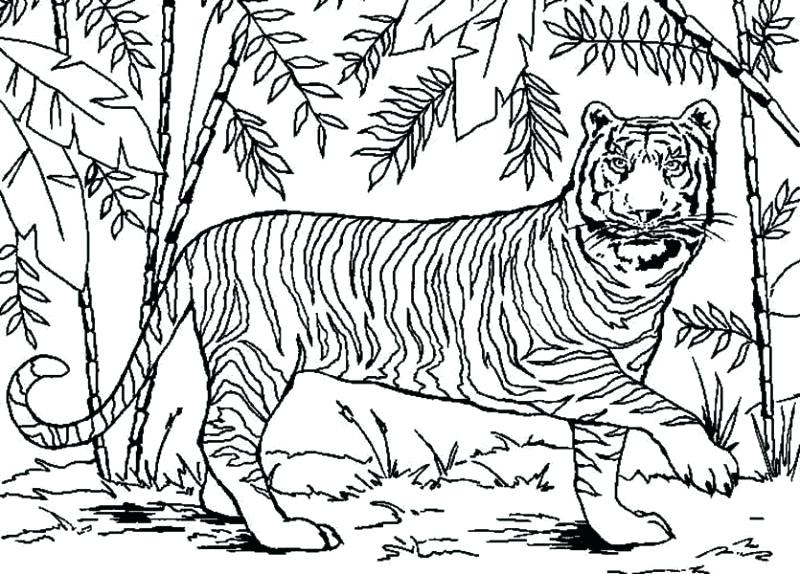 800x574 Forest Coloring Pages Forest Coloring Pages Best Forest Coloring
