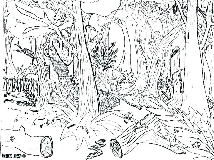 728x546 Forest Coloring Pages To Print Flowers Coloring Pages Coloring