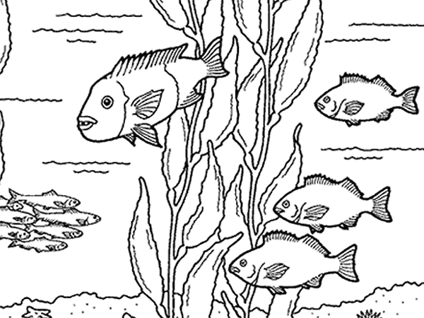 600x450 Kelp Forest Friends Kids Kelp Forest And Forest