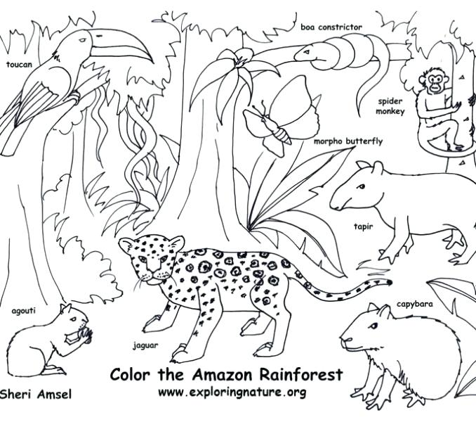 678x600 Rainforest Coloring Page Forest Coloring Pages Printable Free