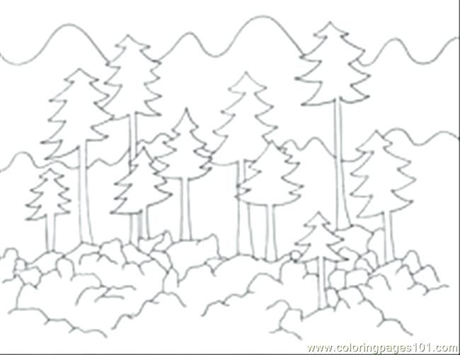 650x502 Forest Coloring Pages Printable
