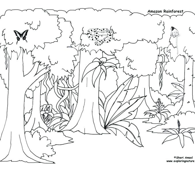 678x600 Rain Forest Coloring Pages