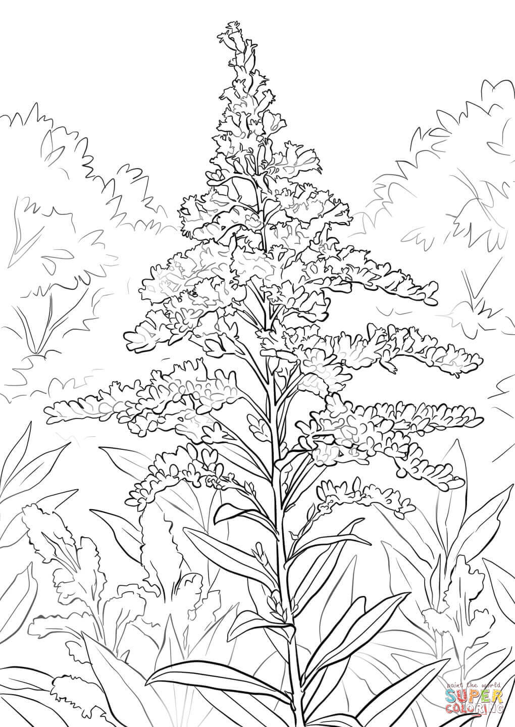 1020x1440 Mainstream Goldenrod Coloring Page Giant Free Printable Pages