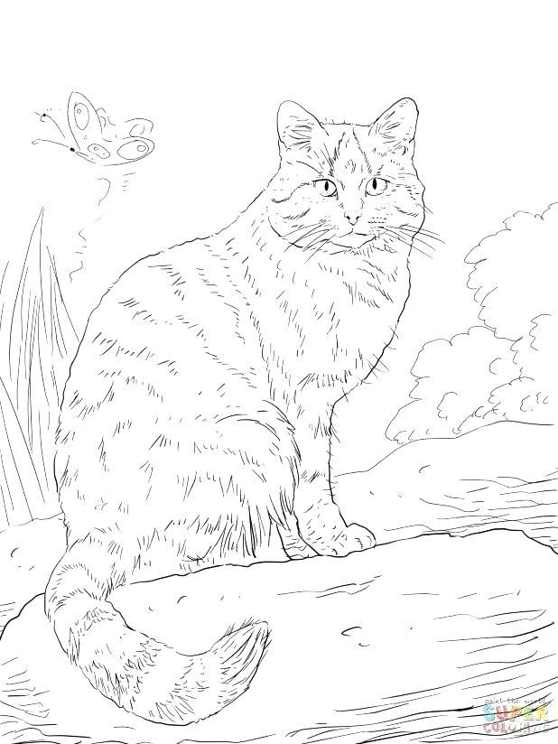 618x824 Wildcat Coloring Page Wildcat Coloring Page Adult Wild Cat
